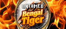 This is an Exiting Safari adventure that makes you win a lot of money.  Bengal's tiger have a treasure for you.